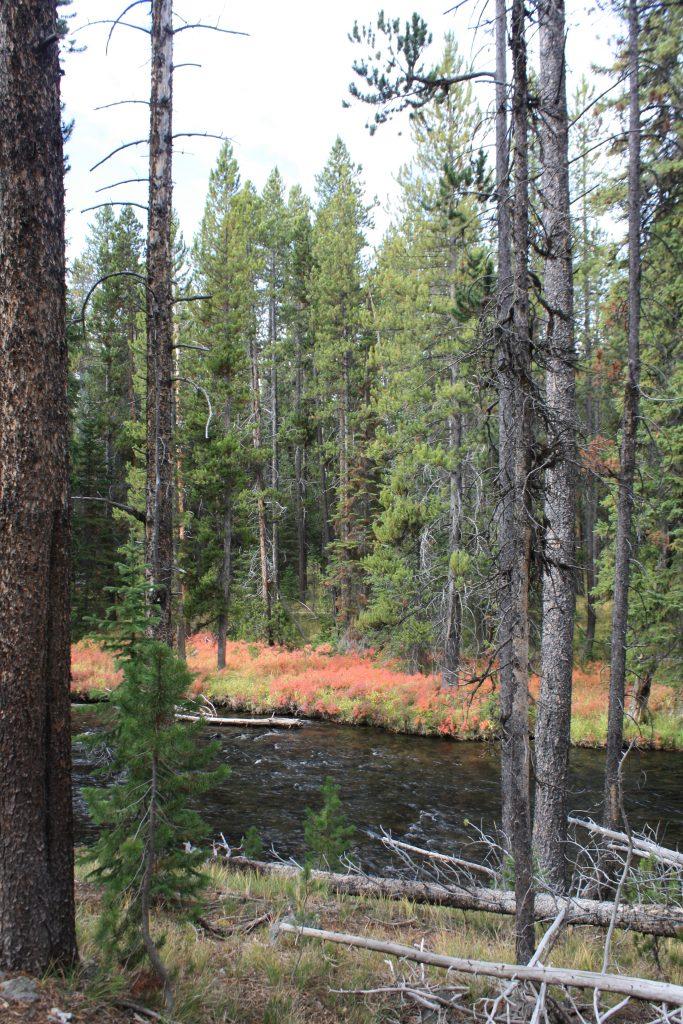 Firehole Creek, Yellowstone